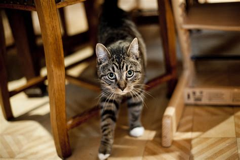 Stop your Cat Spraying or Soiling in the House | Blue Cross