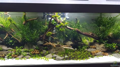 Example No 32550 from the category aquascaping